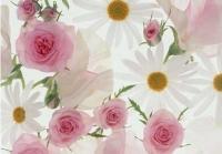 ジャーナルスタッフ株式会社 高崎本社/登録会太田の求人情報を見る