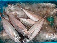 常洋水産株式会社 土浦支社の求人情報を見る