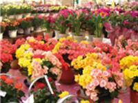 (有)東京花壇の求人情報を見る