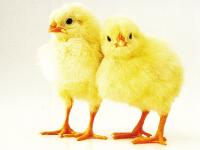 有限会社 境野養鶏の求人情報を見る