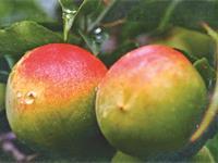 清水の梅の求人情報を見る
