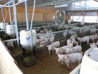 株式会社フリーデン都路牧場の求人情報を見る