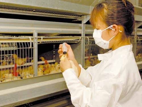 株式会社 境野養鶏の求人情報を見る
