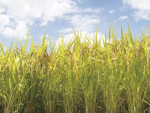 株式会社 加瀬米穀の求人情報を見る
